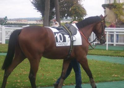 chevaux de course galop